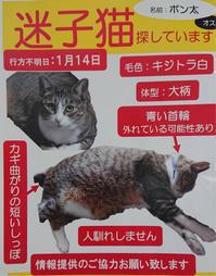 脱走した猫を捜しています(2019.3.19依頼掲載) - きよせ猫耳の会(旧 飼い主のいない猫を考える会)