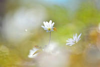 静かな瞳 - お花びより