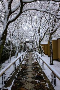 雪景色!~光悦寺~ - Prado Photography!