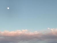 定点観察!??「雨のあがったの夕方・東の空」編 - ドライフラワーギャラリー⁂ふくことカフェ