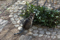 月桂樹 - 小さな森のキキとサラ