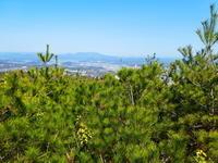 アセビ咲く明王山 (380M)   迫間城跡登頂 編 - 風の便り