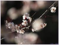 赤塚植物園から郷土資料館へ-2014) - 趣味の写真 ~OLYMPUS E-M1MarkⅡ、PenF~