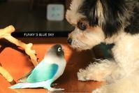 B.B & Chipo*おやっ、あらっ、あらら~??? - FUNKY'S BLUE SKY