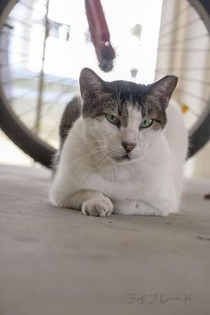 ご近所猫 2019.03.17 - Rayblade Photos