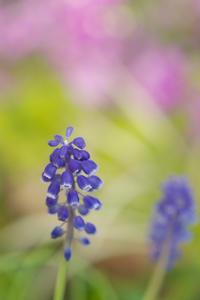 色彩も春めいて - Change The World