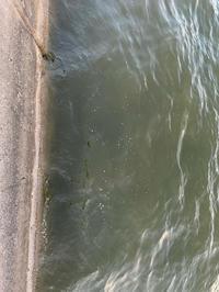 根魚狩り - 広島の〜中学生Seabass angler