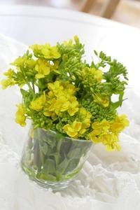 菜の花 - やさしい風に誘われて