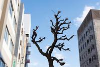 木が語りかけてきた - ホンテ島 日記