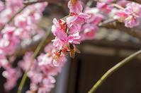 春の歌が響く - 良え畝のブログ