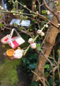 鎌倉心景「友」 - 海の古書店