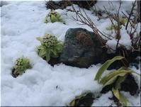 名残の雪 と、映画の話 - Que Sera *Sera