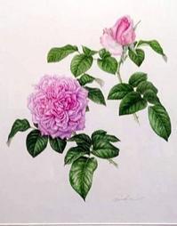 バラのボタニカルアート・デモンストレーション&お茶会パーティーのご案内 - バラとハーブのある暮らし Salon de Roses