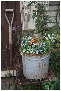 花の美しい移り変わり - natu     * 素敵なナチュラルガーデンから~*     福岡で庭造り、外構工事(エクステリア)をしてます