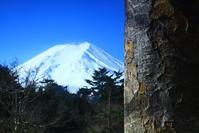 31年3月の富士番外編控えめに見える富士 - 富士への散歩道 ~撮影記~