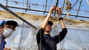 地域貢献型農福連携3件の請負作業・果樹コンテナ移植 - ジョブファーム活動ブログ