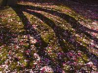 梅の花鈴鹿の森庭園&いなべ市農業公園 - 高原に行きたい