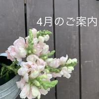 4月のご案内 - 京都自宅パンと料理の教室(北区) ときどき舞鶴