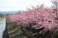 奈良をてくてく★☆。○ - お花畑で微笑んで**
