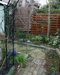 花もも一輪~夕暮れ時の庭より - miyorinの秘密のお庭