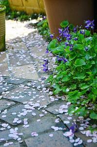 庭の花にも春の声♪ - 花・tuzuri