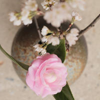 カメラ女子ツアー〜春のお花と、越前焼の器〜@越前古窯博物館 - 田舎のカメラ女子ライフ♪