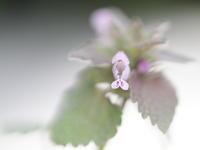 庭の草花 - TACOSの野鳥日記