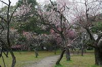 春の花巡り@雨の日の御所其の二 - デジタルな鍛冶屋の写真歩記