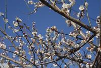 エナガの巣作り - 世話要らずの庭