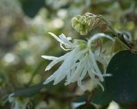 遅れた桜の開花宣言 - PHOTO GALLERY Y&S MAKING