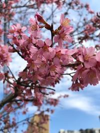 春キャベツのおすすめスピードレシピbyくらしのアンテナ+春も直ぐ - E*N*JOY