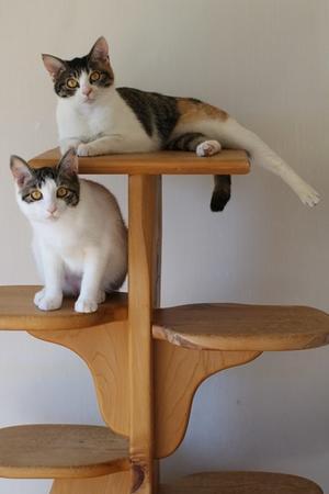 保護猫さん、ご縁を頂きました - 保護猫さんのご縁探し
