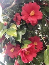 椿の季節 - やわらかな風の吹く場所に:母乳育児を応援