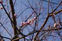 春色の散歩道 - 山の花、町の花