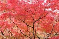 京都へ行く 2018・秋 (18) 永観堂③(11/23-25) - 風の中で~