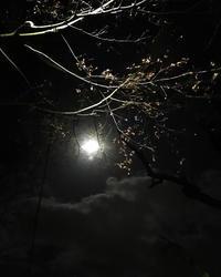 月明かりに導かれて… - 暮らしのエッセンス   北鎌倉の山の家から
