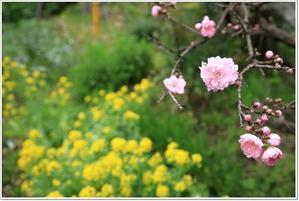 春・春・春・・・ - ハチミツの海を渡る風の音