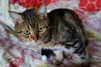 子猫っぽい - ちょっとネコばか