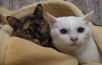 留守番猫の春 - ふらりぶらりの旅日記
