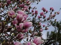 庭の春 - 風の吹くまま