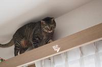 イチロー選手 ありがとう! - きょうだい猫と仲良し暮らし