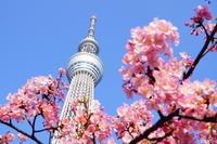 ほっとキャンペーン2019受賞者発表!『小さな春、み~つけた!』編 - エキサイトブログCAFE