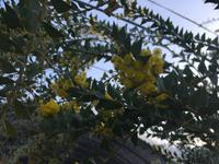 3/24(日) 大分 おおがファームにお邪魔します❤︎ -  お花とハーブのアトリエ muguette