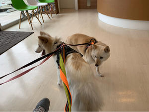狂犬病予防注射と色々な話。 - 一緒に歩こっ!