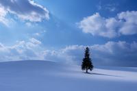 風と君を待つだけ - こまちままのひとりごと