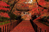 Finale!京の紅葉2018粟生光明寺の敷紅葉 - 花景色-K.W.C. PhotoBlog