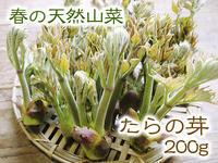 平成31年度の「天然たらの芽」予約受付スタート!!4月上旬からご予約順に発送します! - FLCパートナーズストア