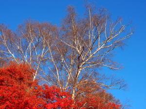 四季のまどろみ - 四季のまどろみ