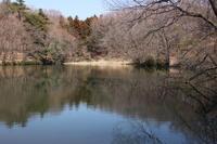 水辺の風景@嶺公園 (2019/3/20撮影) - toshiさんのお気楽ブログ