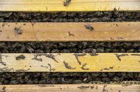 養蜂3年目がはじまる - 良え畝のブログ